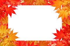 五颜六色的秋天红槭事假与空间的文本或标志的 库存照片