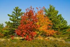 五颜六色的秋天结构树 库存照片