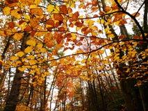 五颜六色的秋天结构树 免版税库存照片