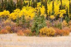 五颜六色的秋天育空加拿大北方森林taiga 免版税库存照片