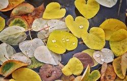 五颜六色的秋天背景由下落的秋叶做成 秋叶抽象背景 秋天背景特写镜头上色常春藤叶子橙红 免版税图库摄影