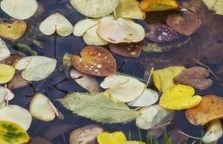 五颜六色的秋天背景由下落的秋叶做成 秋叶抽象背景 秋天背景特写镜头上色常春藤叶子橙红 免版税库存图片