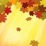 五颜六色的秋天背景 图库摄影