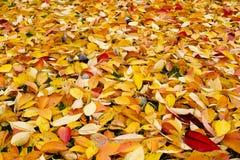 五颜六色的秋天背景 免版税图库摄影