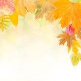五颜六色的秋天背景5 库存例证