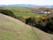 五颜六色的秋天葡萄园 库存图片