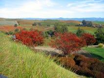 五颜六色的秋天葡萄园 免版税库存照片