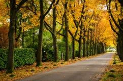 五颜六色的秋天街道叶子背景照片 免版税库存图片