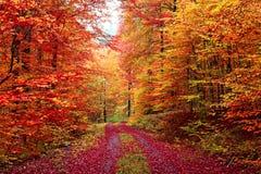五颜六色的秋天足迹在10月 库存图片