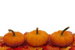 五颜六色的秋天边界 免版税库存图片