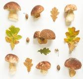 五颜六色的秋天采蘑菇,橡子并且留下背景 秋天背景特写镜头上色常春藤叶子橙红 感恩天概念 平的位置,顶视图 图库摄影