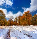 五颜六色的秋天风景在森林里 免版税库存照片