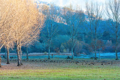 五颜六色的秋天风景 免版税图库摄影