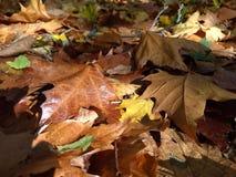 五颜六色的秋天飞机叶子 免版税图库摄影