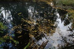 五颜六色的秋天 自然 季节 与下落的干燥叶子的美丽的秋天树 免版税库存照片