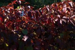 五颜六色的秋天 自然 季节 与下落的干燥叶子的美丽的秋天树 库存图片