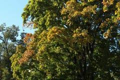 五颜六色的秋天 自然 季节 与下落的干燥叶子的美丽的秋天树 图库摄影