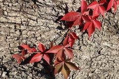 五颜六色的秋天 自然 季节 红色叶子在秋天 免版税库存图片