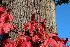 五颜六色的秋天 自然 季节 红色叶子在秋天 库存图片