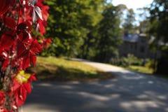 五颜六色的秋天 自然 季节 红色叶子在秋天 库存照片
