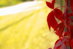 五颜六色的秋天 自然 季节 红色叶子在秋天 免版税库存照片