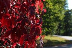 五颜六色的秋天 自然 季节 红色叶子在秋天 免版税图库摄影