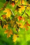 五颜六色的秋天 库存照片