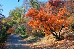 五颜六色的秋天 库存图片