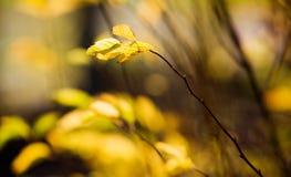 五颜六色的秋天 图库摄影