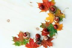 五颜六色的秋天 免版税库存照片