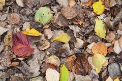 五颜六色的秋季下落的叶子在地面上说谎 库存图片