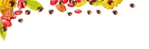 五颜六色的秋季叶子和坚果在白色全景背景与拷贝空间 库存照片