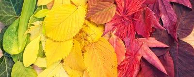 五颜六色的秋季叶子彩虹  库存图片