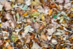 五颜六色的秋季叶子背景 免版税库存照片