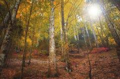 五颜六色的秋季森林在神话奥林匹斯山-希腊 库存照片