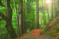 五颜六色的秋季森林在神话奥林匹斯山-希腊 免版税库存照片