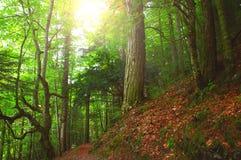 五颜六色的秋季森林在神话奥林匹斯山-希腊 免版税图库摄影