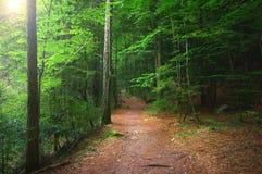 五颜六色的秋季森林在神话奥林匹斯山-希腊 免版税库存图片