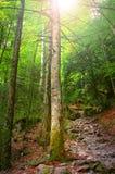 五颜六色的秋季森林在神话奥林匹斯山-希腊 库存图片