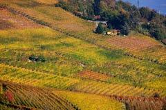五颜六色的秋季葡萄园在意大利 免版税库存照片