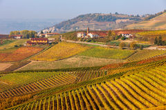 五颜六色的秋季葡萄园在意大利 免版税图库摄影