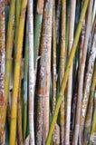 五颜六色的竹子 图库摄影