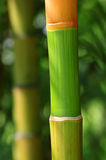 五颜六色的竹子 免版税库存照片