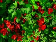 五颜六色的红色花,当日落时 免版税库存照片
