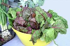 五颜六色的绿色叶茂盛沙拉 库存照片