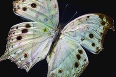 五颜六色的绿色鸭子羽毛宏观照片  免版税图库摄影
