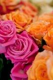 五颜六色的美丽的玫瑰开花宏观特写镜头卡片背景 免版税库存图片