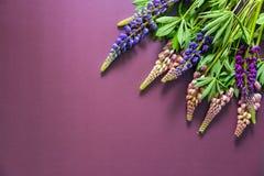 五颜六色的羽扇豆花束在紫色背景的 免版税库存照片