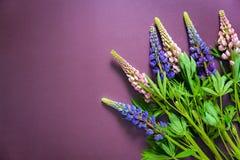 五颜六色的羽扇豆花束在紫色背景的 库存图片