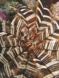 五颜六色的羽毛 免版税库存图片